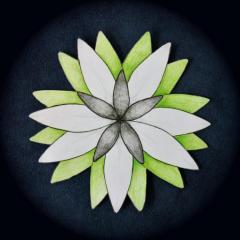 BloomingLate