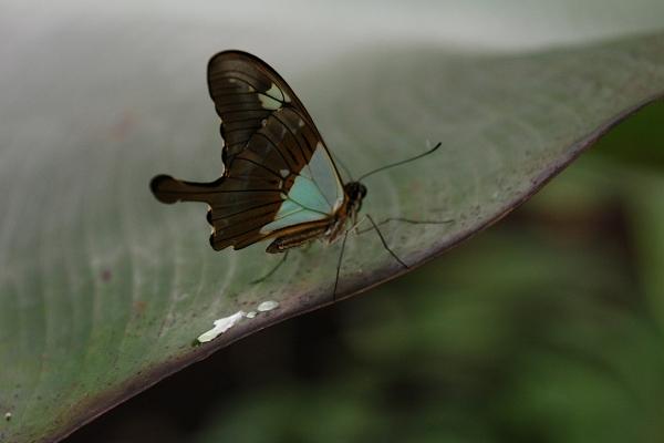 butterfly_02_small.JPG