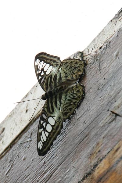 butterfly_03_small.JPG